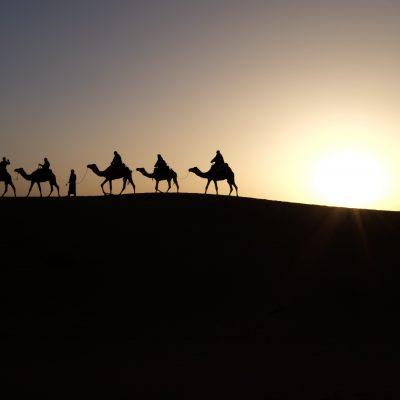 camels-1149803